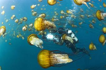 movie.oceans.jpg